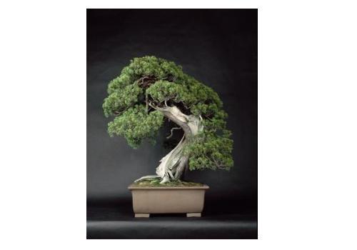 松屋銀座で開催中の盆栽展「BONSAI」が面白そう