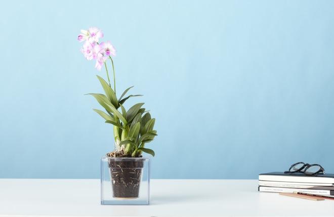 丸見えでアートな植木鉢「Boskke Cube」