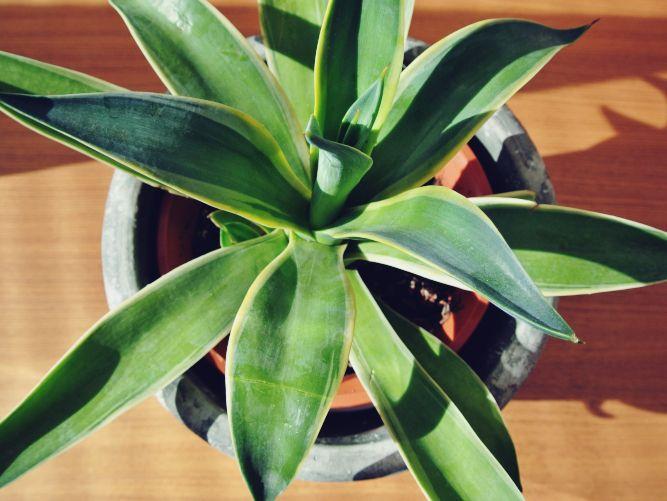 serax-flowerpot_001