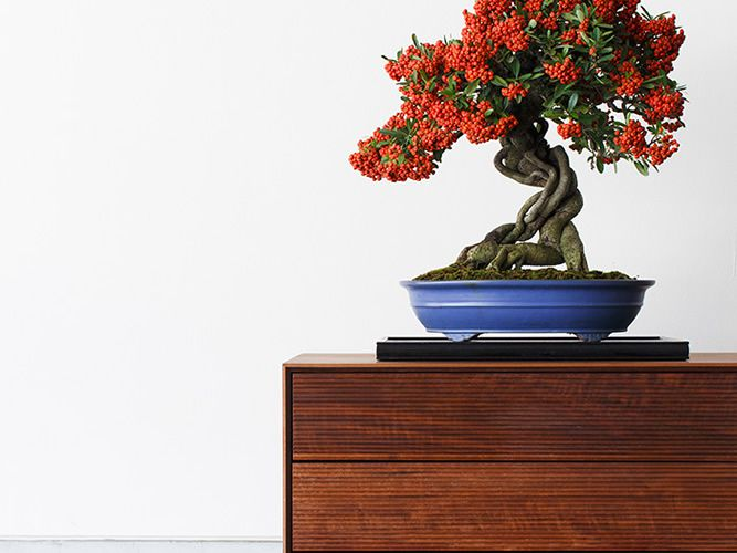 TIME and STYLE Bonsai