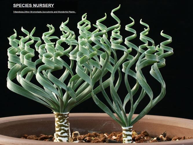 珍植物の限定ショップ