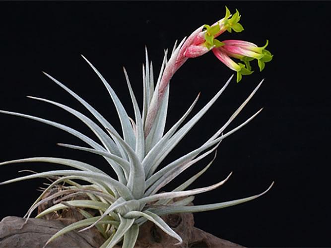 ハーマンミラーストアに「変な植物」のポップアップショップ