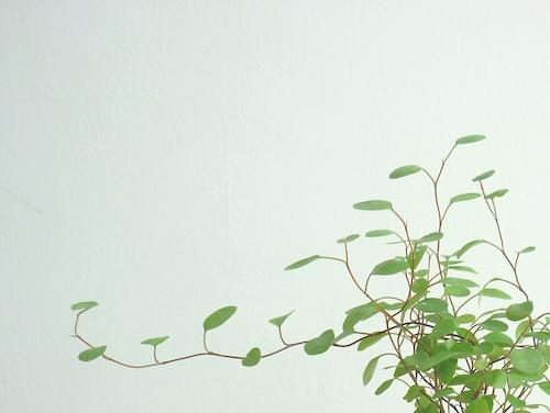 ARABIA green 001