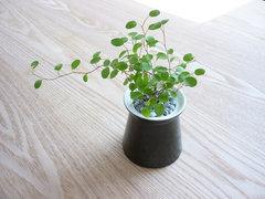 ARABIA green 006 1