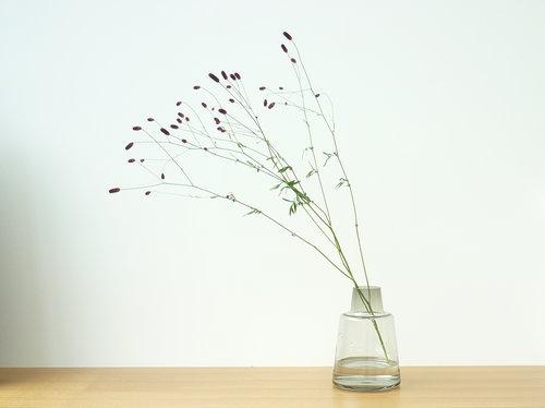 holmegaard flora2 004